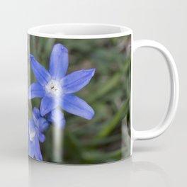 Three snow glories Coffee Mug