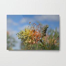 Australian flower and  bee Metal Print