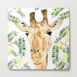 Giraffe and Acacia, Transparent Background Metal Print