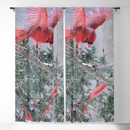 Cardinals Jostling on a Branch in a Snow Storm Blackout Curtain