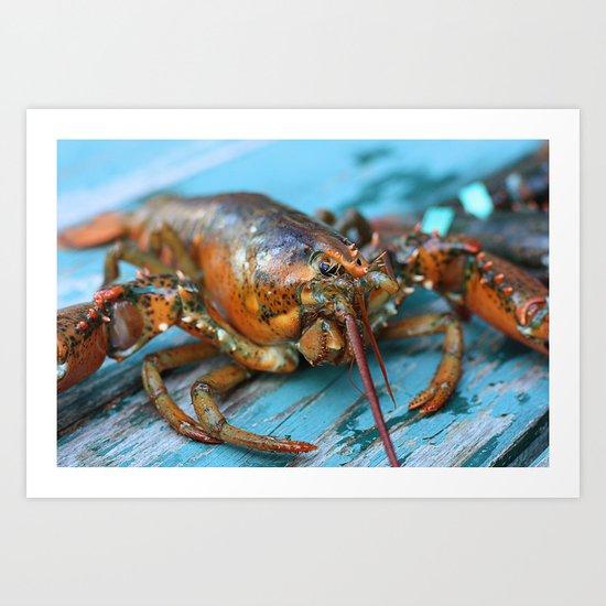 Maine Lobster Art Print