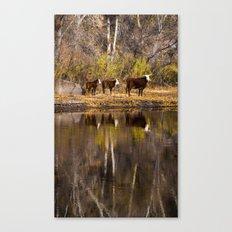 Aloof Canvas Print