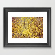 trees yellow leaves Framed Art Print