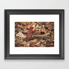 Bird of Ohio Framed Art Print