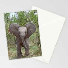 Small Elephant - Africa wildlife Stationery Cards