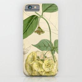 Flower 4545 hoya campanulata Bell flowered Hoya1 iPhone Case