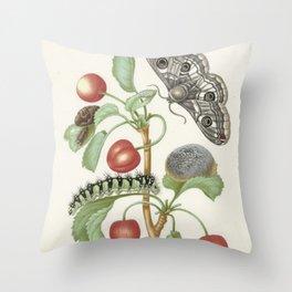 Vintage Botanical Print - Maria Sibylla Merian Throw Pillow