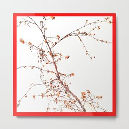 Tree Branch in a Red Frame.  Metal Print