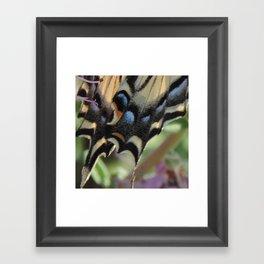 Detail of a Swallowtail Framed Art Print