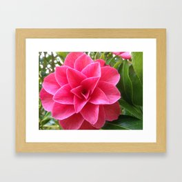 Rosé Tea Rose Framed Art Print