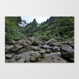Forest Rocks Canvas Print