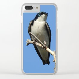Male Tree Swallow Clear iPhone Case