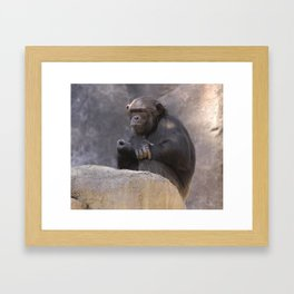 Primates  Framed Art Print
