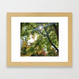Blue Streak of Sunshine Amongst Autumn Tree's Framed Art Print
