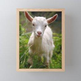 Baby goat Framed Mini Art Print