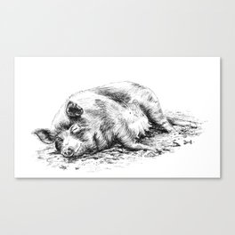 Sunbathing pig Canvas Print