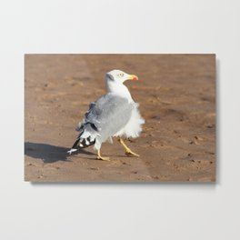 Seagull in a windy day with ruffled feathers Metal Print