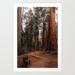A Very Nice Place to Sit Art Print