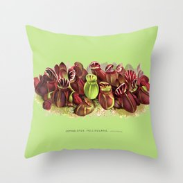 Cephalotus Follicularis (Albany Pitcher Plant)  Throw Pillow