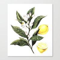 lemon Canvas Prints featuring Lemon by Anna Yudina