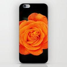 Romantic Rose Orange iPhone & iPod Skin
