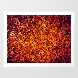 The Embers of Fall Art Print