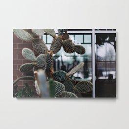 Cactus Paddles Metal Print