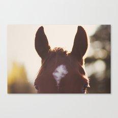 I'm all ears. Canvas Print