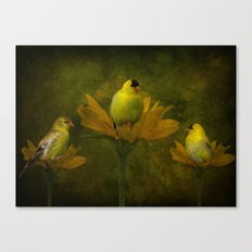 A Family of Goldfinch Canvas Print