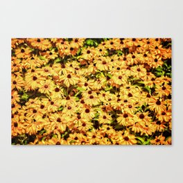 A field of Sunshine Canvas Print