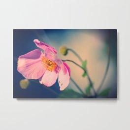 Dynamic Anemone Botanical photograph print; hot pink poppy type flower with gold vivid blue Metal Print