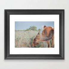 wild horse, assateague Framed Art Print