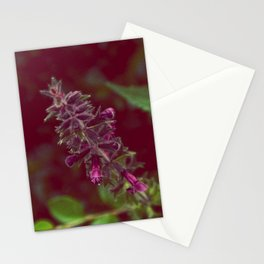 Sweetness Stationery Cards