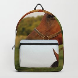 Stormy, our Arabian Backpack