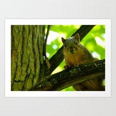 Squirrels are photogenic. Art Print