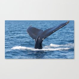 Humpback Whale Tail Canvas Print