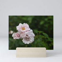 Pink Rose Bush Mini Art Print