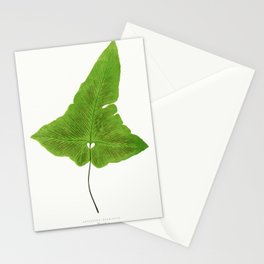 Edward Joseph Lowe - Asplenium Palmatum Stationery Cards