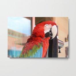 Margaritaville Parrot Metal Print