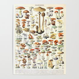 Adolphe Millot - Champignons B - French vintage poster Poster