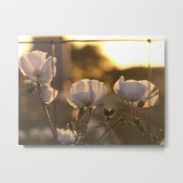 Sunset in Spring Metal Print