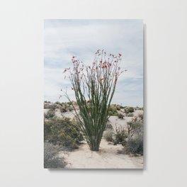 Joshua Tree Ocotillo Metal Print