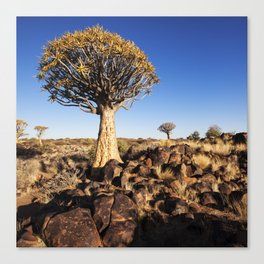 Quiver Trees in Namibia Canvas Print