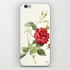 Botanical study - Rose iPhone & iPod Skin
