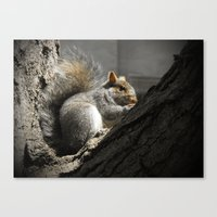 squirrel Canvas Prints featuring Squirrel by Mandy Becker