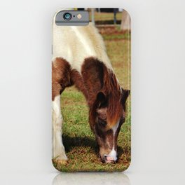American Paint Horse iPhone Case