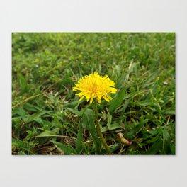 Dandelion Perfection Canvas Print