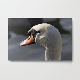 The Waiting Swan Metal Print