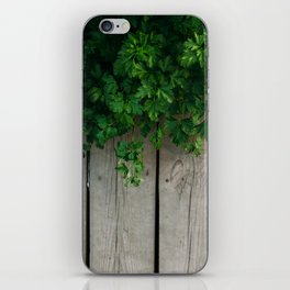 Boards and fennel iPhone Skin