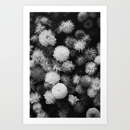 In Bloom (Black and White) Art Print